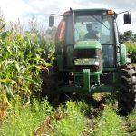 Colheita do milho silagem em pequenas propriedades